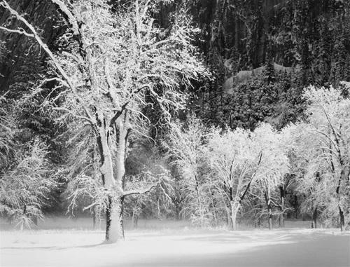 Fresh Snow on Trees, Sun, Yosemite Valle